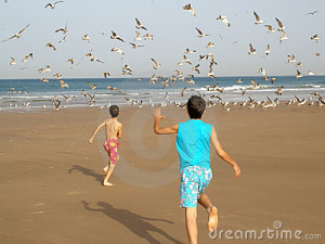 boys and seagulls